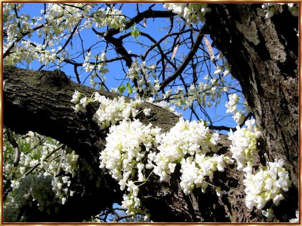 Wie mag in einem rechten Sturm ein Baum zum Gefühl seiner selbst kommen.