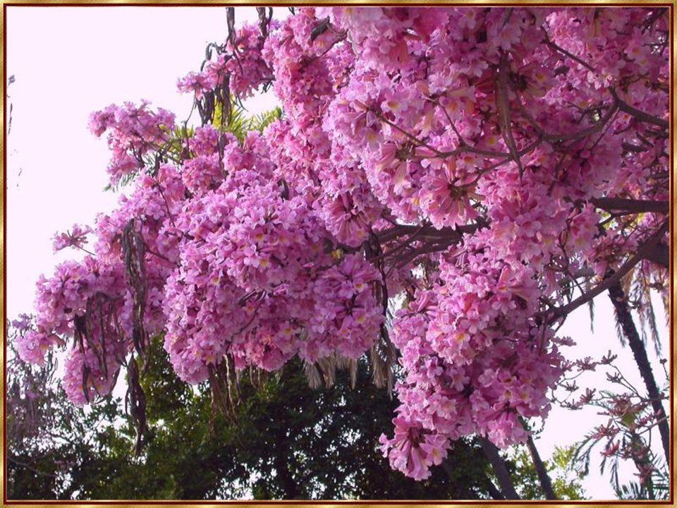 Blumen sind Boten Gottes, die blühen, damit wir Menschen nicht vergessen, wie schön seine Schöpfung ist.