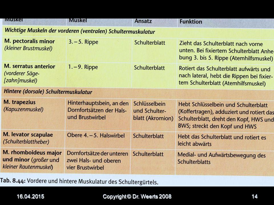 DIE SCHULTERGÜRTELMUSKULATUR 16.04.2015Copyright © Dr. Weerts 200813