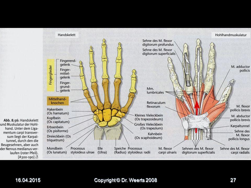 Handmuskeln viele kleine Muskeln viele kleine Muskeln erlauben die Feinmotorik beim Zusammenspiel der Fingergelenke erlauben die Feinmotorik beim Zusammenspiel der Fingergelenke in der Hohlhand  Palmaraponeurose in der Hohlhand  Palmaraponeurose (= flächige Sehnenplatte) zum Schutz der Nerven und Gefäße beim Greifen zum Schutz der Nerven und Gefäße beim Greifen 16.04.2015Copyright © Dr.