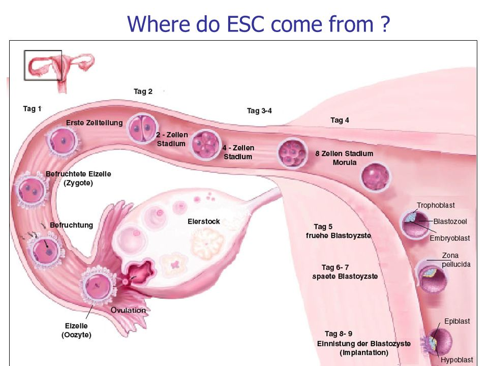 Where do ESC come from ?