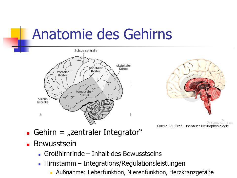 """Anatomie des Gehirns Gehirn = """"zentraler Integrator Bewusstsein Großhirnrinde – Inhalt des Bewusstseins Hirnstamm – Integrations/Regulationsleistungen Außnahme: Leberfunktion, Nierenfunktion, Herzkranzgefäße Quelle: VL Prof."""