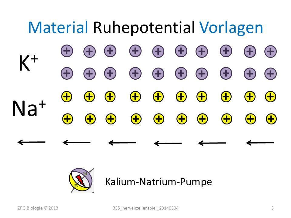 Material Aktionspotential Übersicht 1 Spielplan (Aktionspotential) 1 Reizelektrode 4 Natriumkanäle (offen) 3 Kaliumkanäle (offen) 6 Pfeile (Strömungsrichtung Ionen) 16 Natriumionen (gelbe Knöpfe) 17 Kaliumionen (violette Knöpfe) Material vor und nach dem Spiel auf Vollständigkeit prüfen.