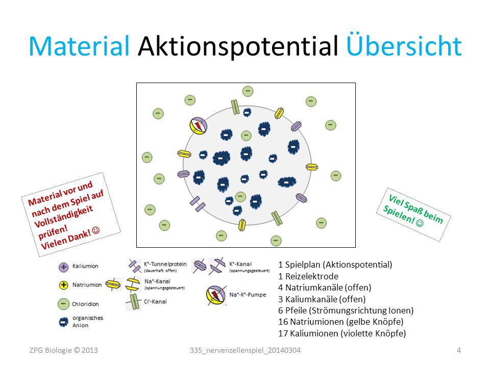 Material Aktionspotential Vorlagen + + ++ + + + + ++ + + ++ + + + + ++ ++++++++++ ++++++++++ K+K+ Na + Kanäle (offen) + + Reiz- Elektrode 335_nervenzellenspiel_20140304 5 ZPG Biologie © 2013