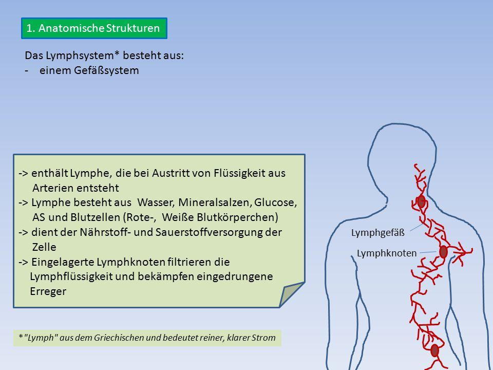 1. Anatomische Strukturen Das Lymphsystem* besteht aus: - einem Gefäßsystem *