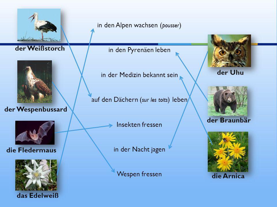 in den Alpen wachsen ( pousser ) in den Pyrenäen leben in der Medizin bekannt sein auf den Dächern ( sur les toits ) leben Insekten fressen in der Nac