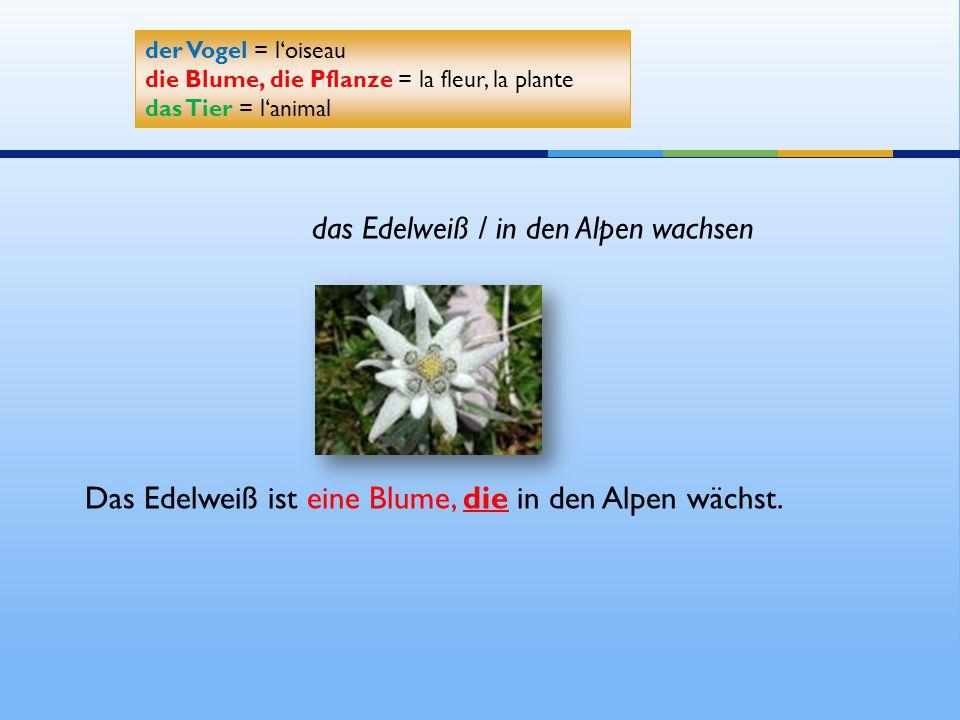 Das Edelweiß ist eine Blume, die in den Alpen wächst. der Vogel = l'oiseau die Blume, die Pflanze = la fleur, la plante das Tier = l'animal der Vogel