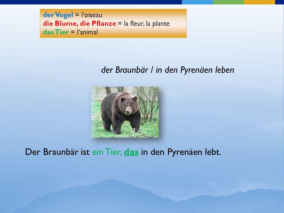 der Braunbär / in den Pyrenäen leben der Vogel = l'oiseau die Blume, die Pflanze = la fleur, la plante das Tier = l'animal der Vogel = l'oiseau die Bl