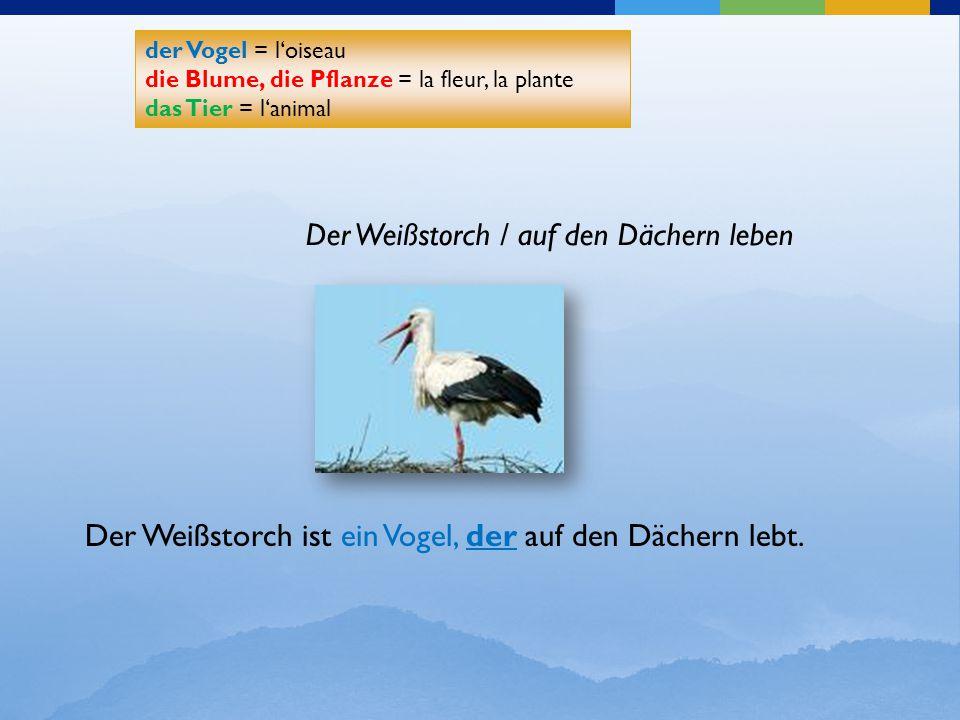 Der Weißstorch / auf den Dächern leben der Vogel = l'oiseau die Blume, die Pflanze = la fleur, la plante das Tier = l'animal der Vogel = l'oiseau die