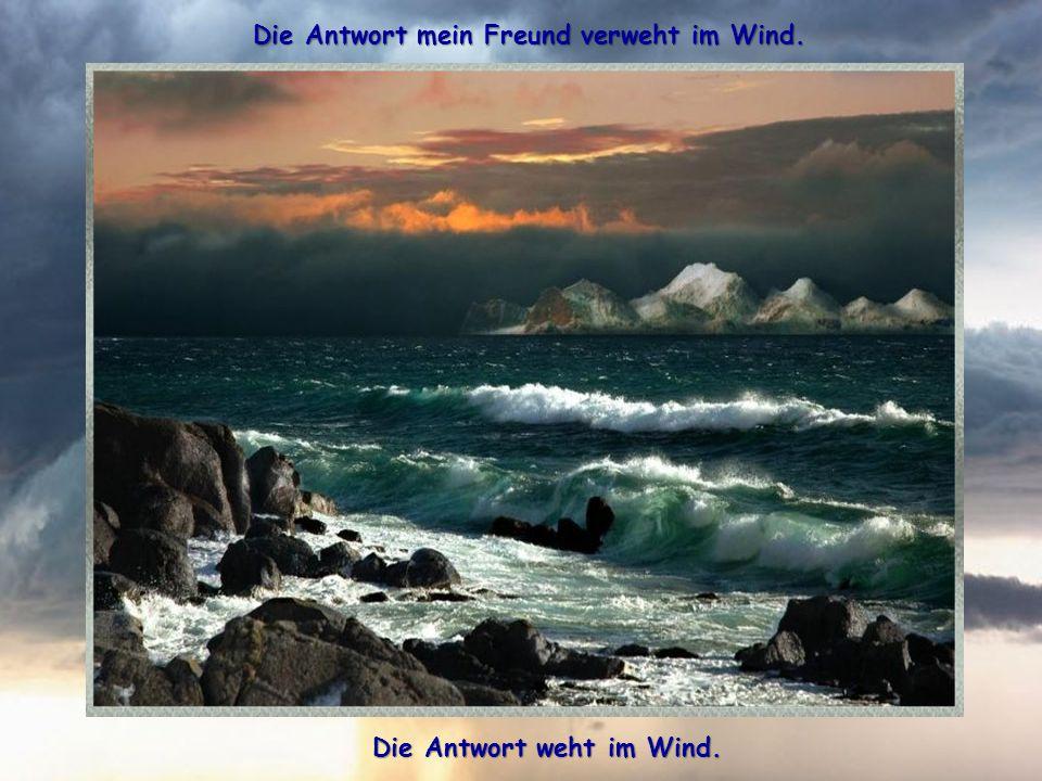 Die Antwort, mein Freund weiss ganz allein der Wind, die Antwort weiss ganz allein der Wind.