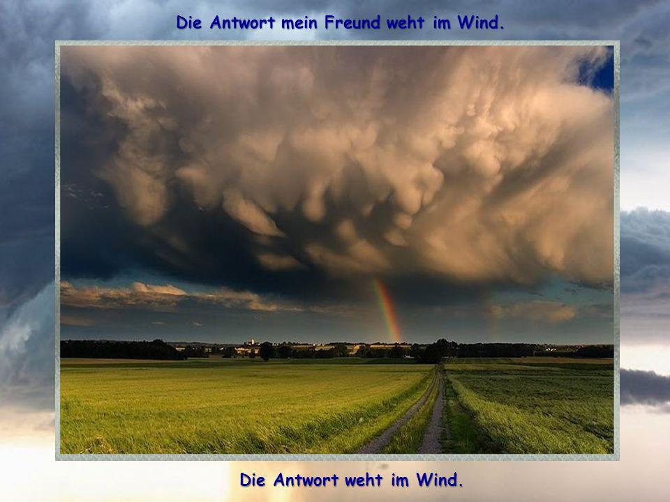 Die Antwort mein Freund weht im Wind. Die Antwort weht im Wind.