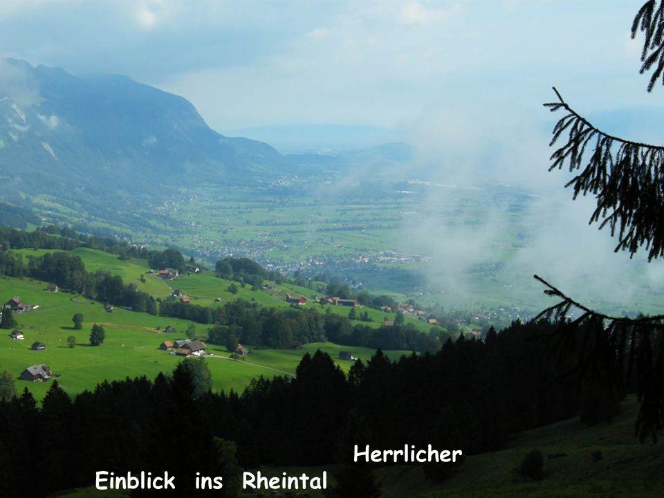 Herrlicher Einblick ins Rheintal