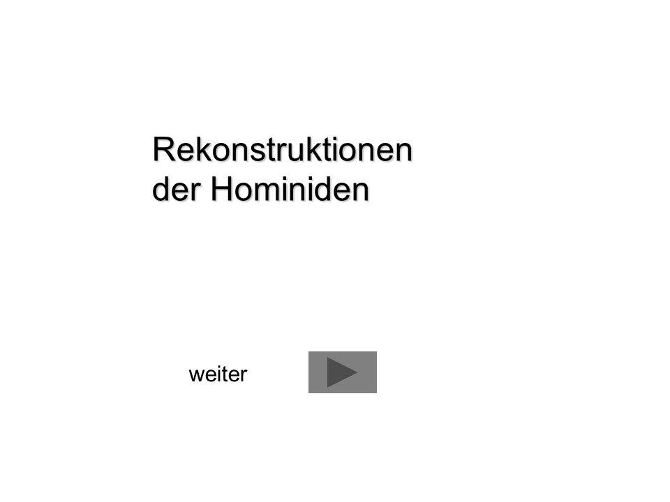 Rekonstruktionen der Hominiden weiter