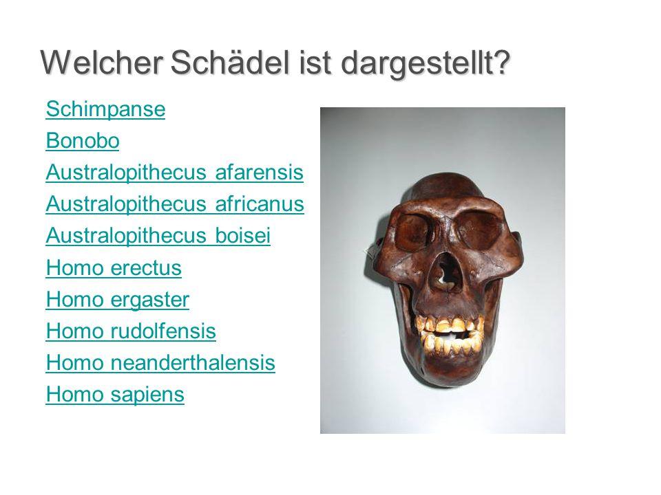 Welcher Schädel ist dargestellt? Schimpanse Bonobo Australopithecus afarensis Australopithecus africanus Australopithecus boisei Homo erectus Homo erg