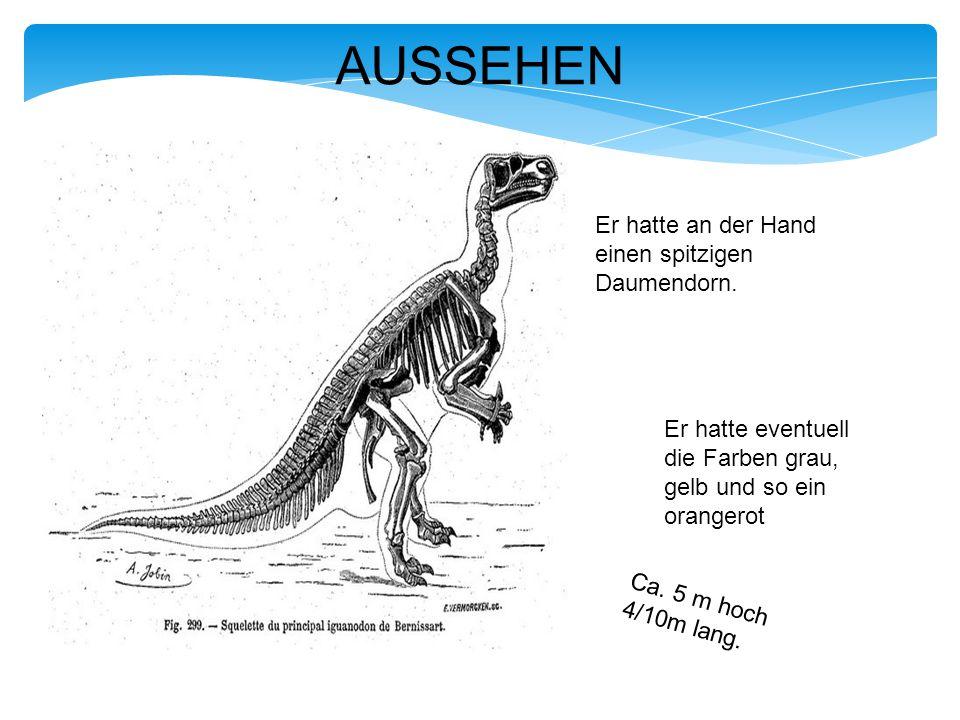 Iguanodon ist der erste Dinosaurier der einen Namen erhalten hatte.