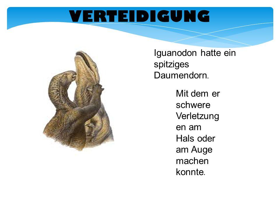 VERTEIDIGUNG Iguanodon hatte ein spitziges Daumendorn. Mit dem er schwere Verletzung en am Hals oder am Auge machen konnte.