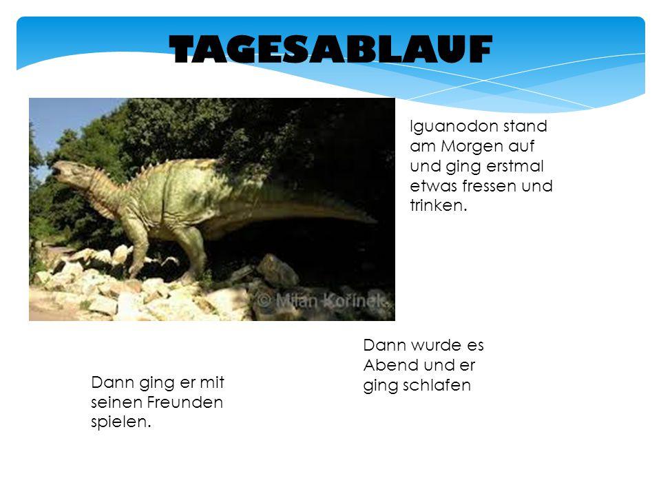 TAGESABLAUF Iguanodon stand am Morgen auf und ging erstmal etwas fressen und trinken. Dann ging er mit seinen Freunden spielen. Dann wurde es Abend un