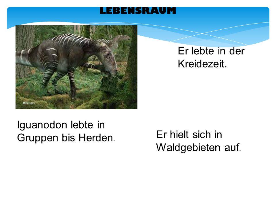 LEBENSRAUM Er lebte in der Kreidezeit. Iguanodon lebte in Gruppen bis Herden. Er hielt sich in Waldgebieten auf.