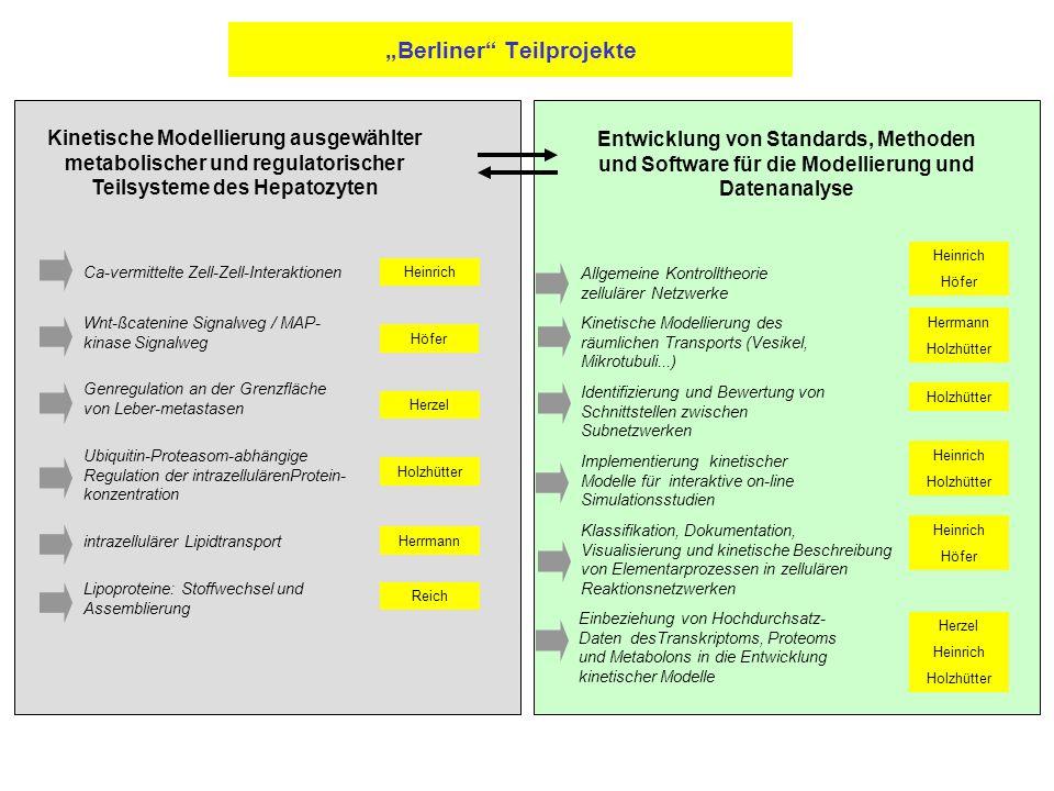 """""""Berliner Teilprojekte Wnt-ßcatenine Signalweg / MAP- kinase Signalweg Ca-vermittelte Zell-Zell-Interaktionen Genregulation an der Grenzfläche von Leber-metastasen Ubiquitin-Proteasom-abhängige Regulation der intrazellulärenProtein- konzentration intrazellulärer Lipidtransport Lipoproteine: Stoffwechsel und Assemblierung Allgemeine Kontrolltheorie zellulärer Netzwerke Kinetische Modellierung des räumlichen Transports (Vesikel, Mikrotubuli...) Identifizierung und Bewertung von Schnittstellen zwischen Subnetzwerken Implementierung kinetischer Modelle für interaktive on-line Simulationsstudien Klassifikation, Dokumentation, Visualisierung und kinetische Beschreibung von Elementarprozessen in zellulären Reaktionsnetzwerken Einbeziehung von Hochdurchsatz- Daten desTranskriptoms, Proteoms und Metabolons in die Entwicklung kinetischer Modelle Kinetische Modellierung ausgewählter metabolischer und regulatorischer Teilsysteme des Hepatozyten Entwicklung von Standards, Methoden und Software für die Modellierung und Datenanalyse Heinrich Höfer Herzel Holzhütter Herrmann Reich Heinrich Höfer Herrmann Holzhütter Heinrich Holzhütter Heinrich Höfer Herzel Heinrich Holzhütter"""