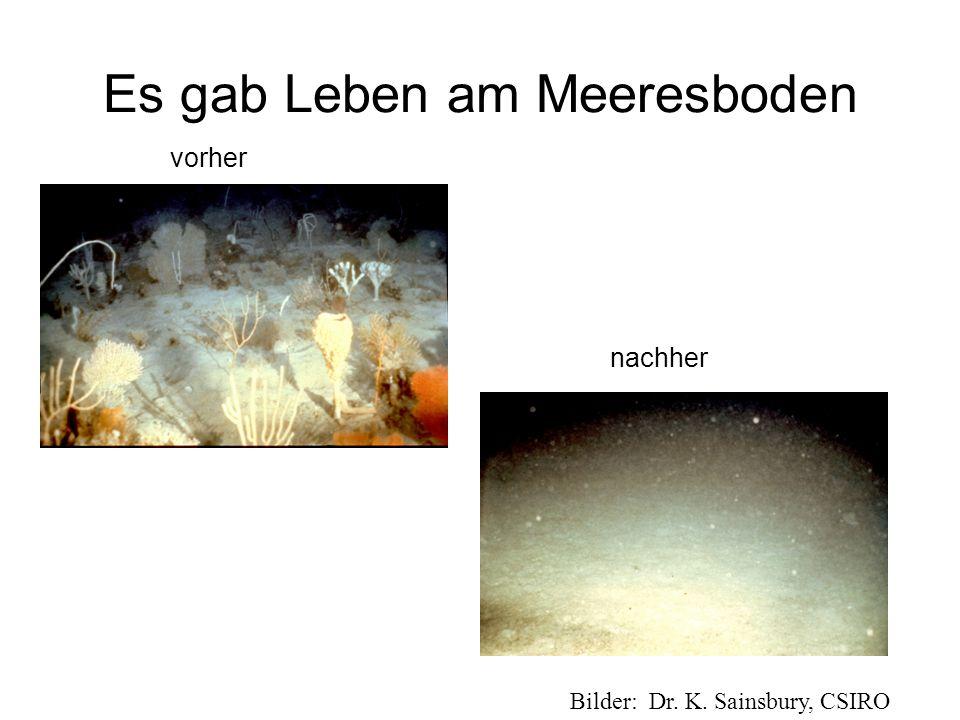 Es gab Leben am Meeresboden Bilder: Dr. K. Sainsbury, CSIRO vorher nachher