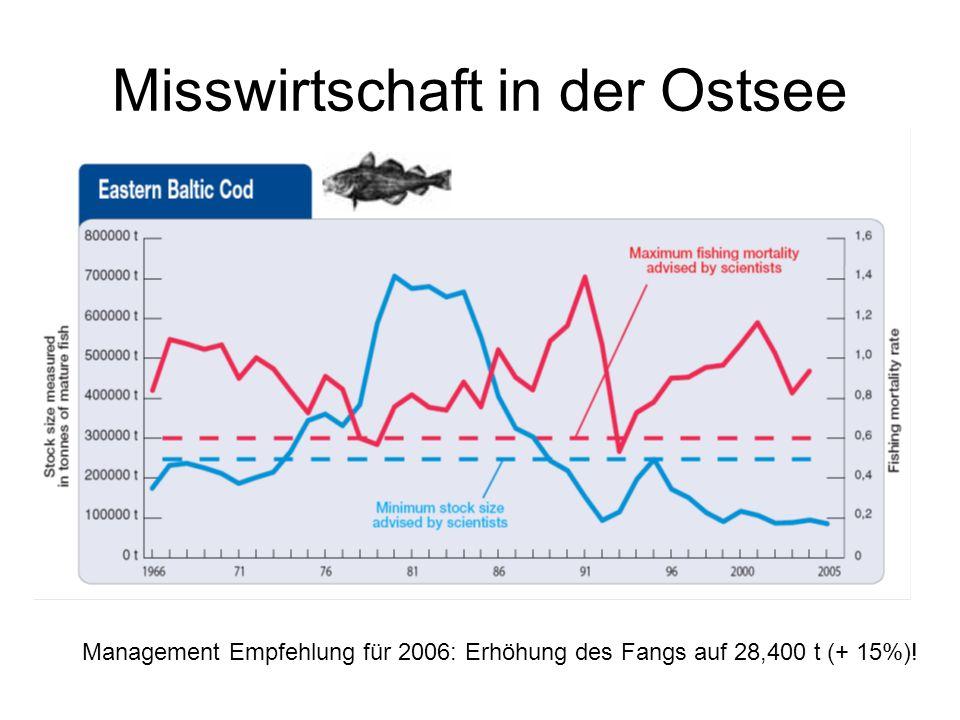 Misswirtschaft in der Ostsee Management Empfehlung für 2006: Erhöhung des Fangs auf 28,400 t (+ 15%)!