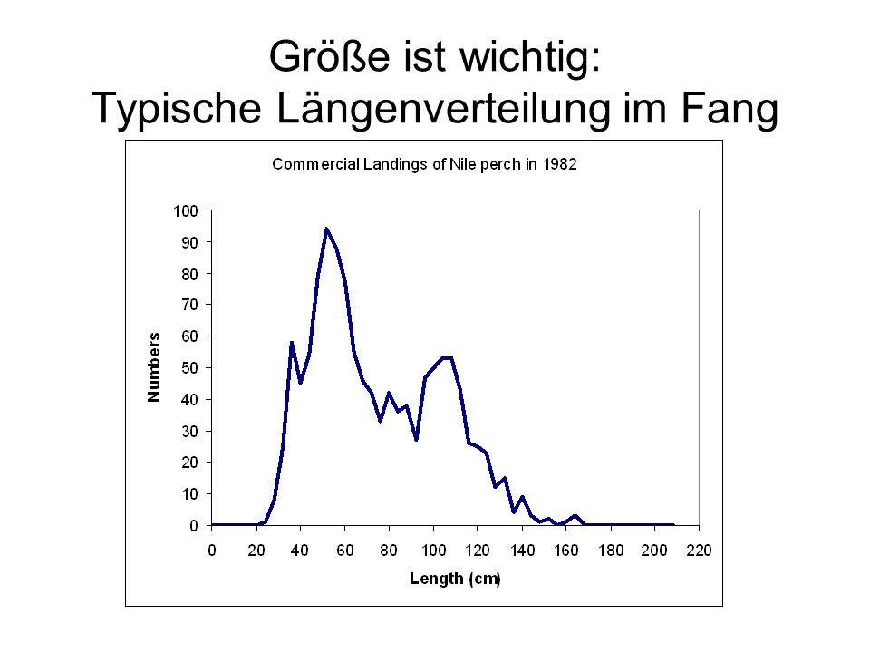 Größe ist wichtig: Typische Längenverteilung im Fang