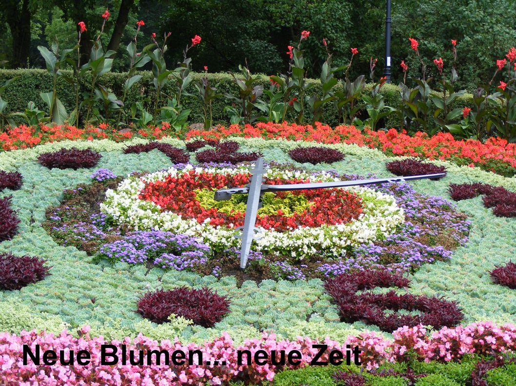 Neue Blumen... neue Zeit