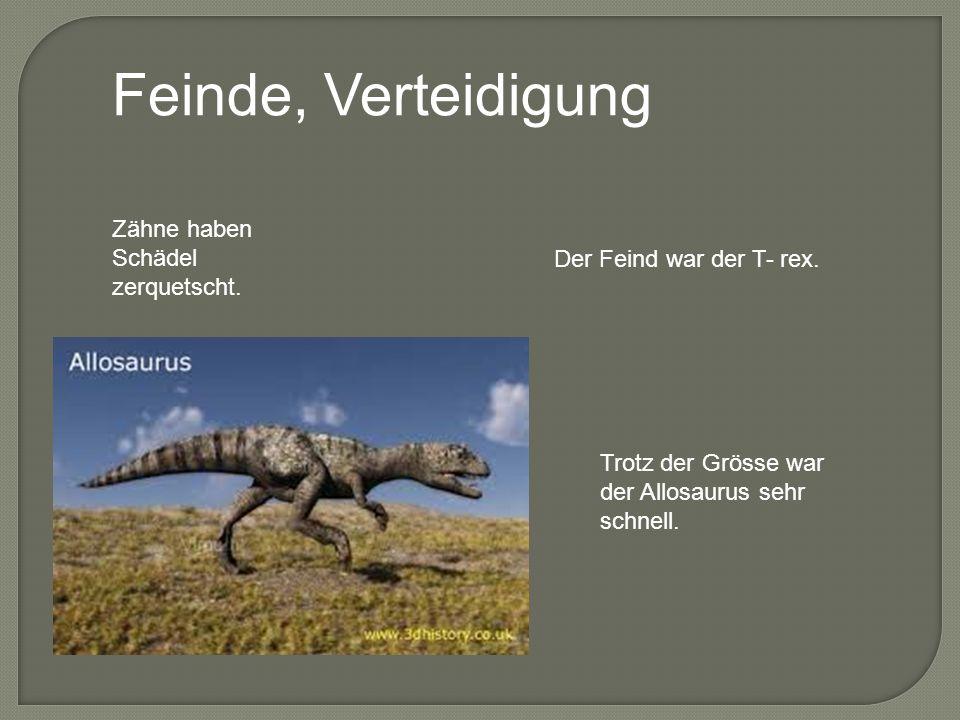 Feinde, Verteidigung Zähne haben Schädel zerquetscht. Der Feind war der T- rex. Trotz der Grösse war der Allosaurus sehr schnell.
