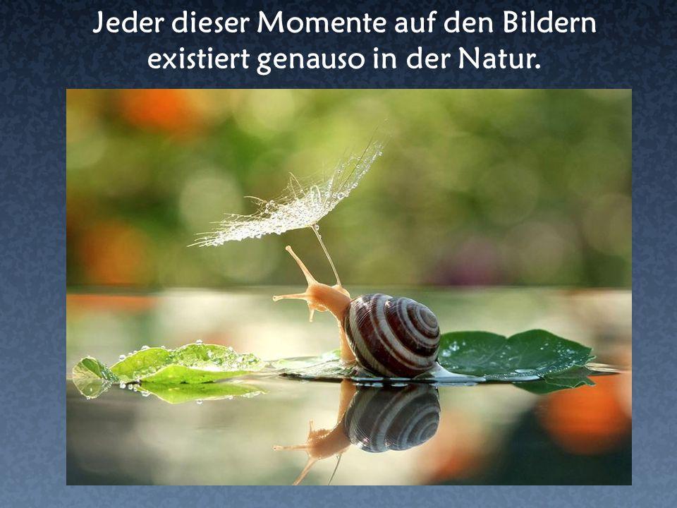Jeder dieser Momente auf den Bildern existiert genauso in der Natur.