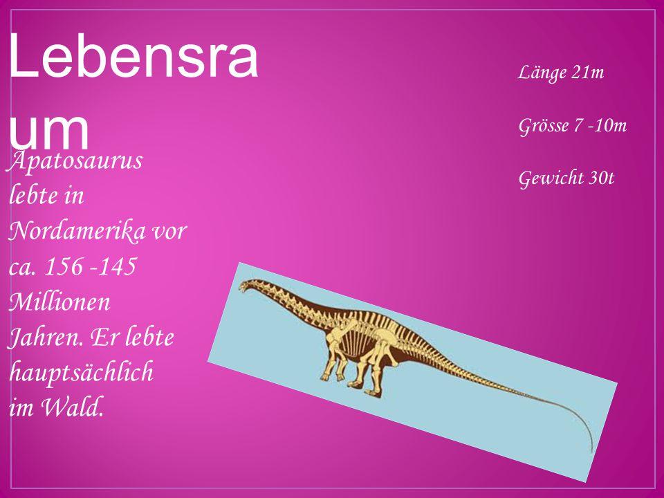 Lebensra um Apatosaurus lebte in Nordamerika vor ca. 156 -145 Millionen Jahren. Er lebte hauptsächlich im Wald. Länge 21m Grösse 7 -10m Gewicht 30t