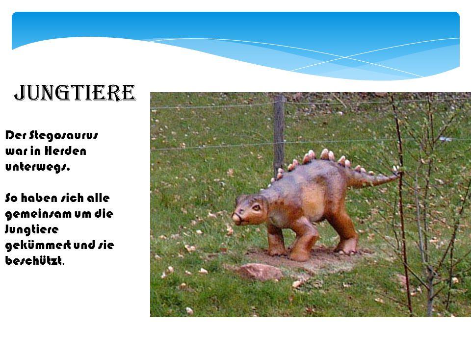 Nahrung Der Stegosaurus ernährte sich von Blättern von bäumen und von Farnen.