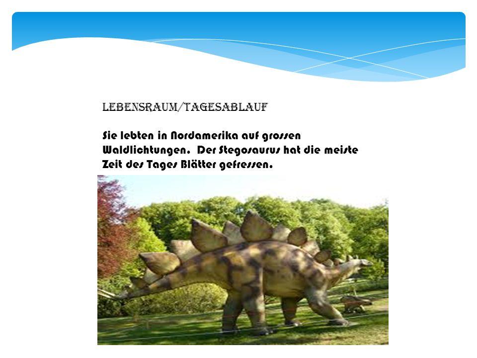 Übersetzung Stegosaurus bedeutet Dachechse.