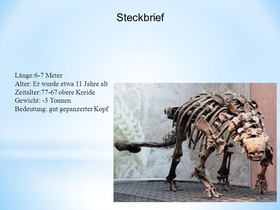 Länge:6-7 Meter Alter: Er wurde etwa 11 Jahre alt Zeitalter:77-67 obere Kreide Gewicht: -3 Tonnen Bedeutung: gut gepanzerter Kopf Steckbrief