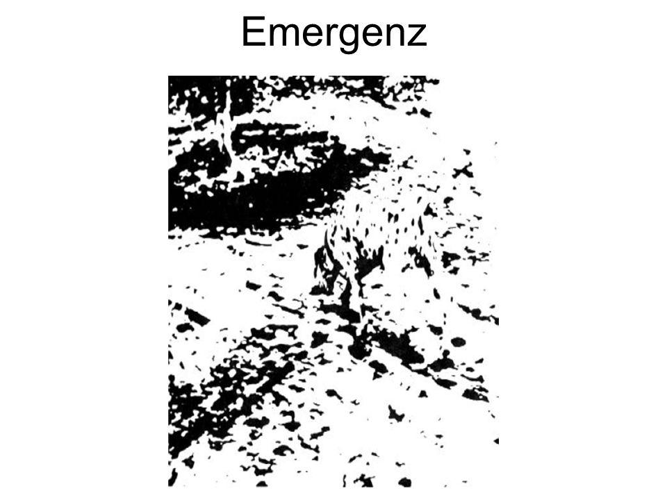 Das Bild vom Dalmatiner gilt in der Psychologie als ein Beispiel für die ganzheitliche Erfassung der Gestalt in der Wahrnehmung; es werden nicht zuerst die einzelnen Gliedmaßen erkannt und dann zum Hund zusammengesetzt, sondern das Bild emergiert aus den Punkten.