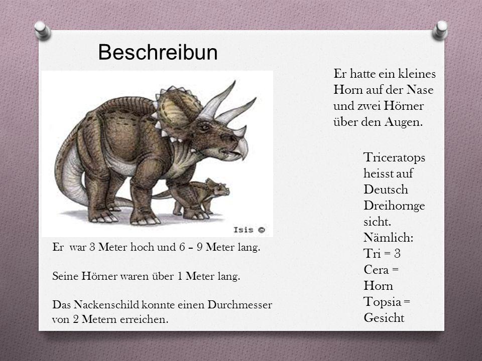 Beschreibun g Triceratops heisst auf Deutsch Dreihornge sicht.