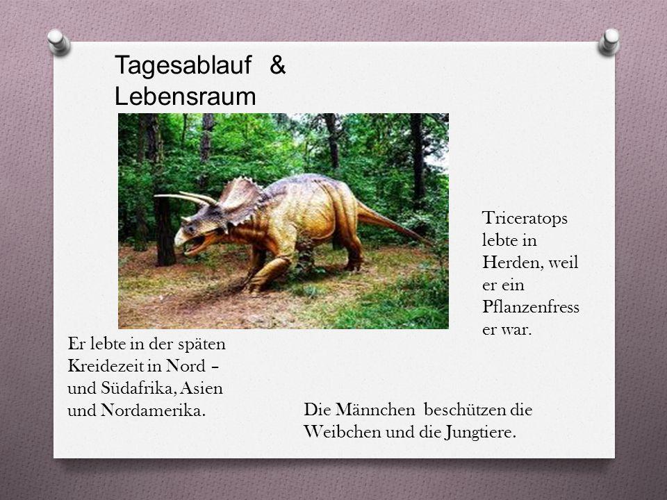 Tagesablauf & Lebensraum Triceratops lebte in Herden, weil er ein Pflanzenfress er war.