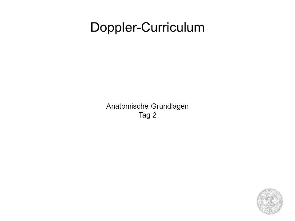 Doppler-Curriculum Anatomische Grundlagen Tag 2