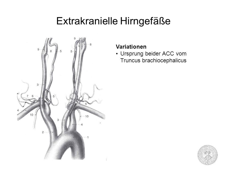 Extrakranielle Hirngefäße Variationen Ursprung beider ACC vom Truncus brachiocephalicus