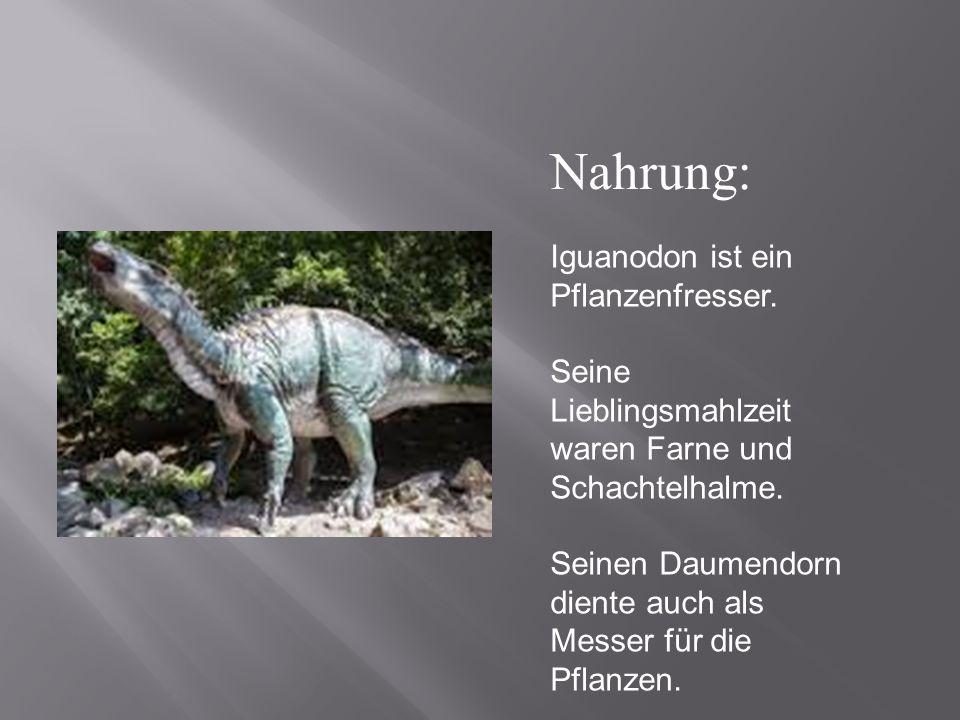 Iguanodon ist ein Pflanzenfresser. Seine Lieblingsmahlzeit waren Farne und Schachtelhalme. Seinen Daumendorn diente auch als Messer für die Pflanzen.