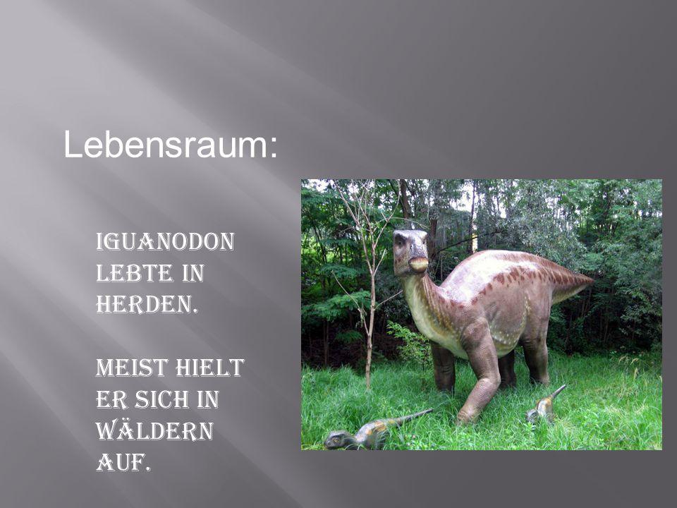 Iguanodon lebte in Herden. Meist hielt er sich in Wäldern auf. Lebensraum: