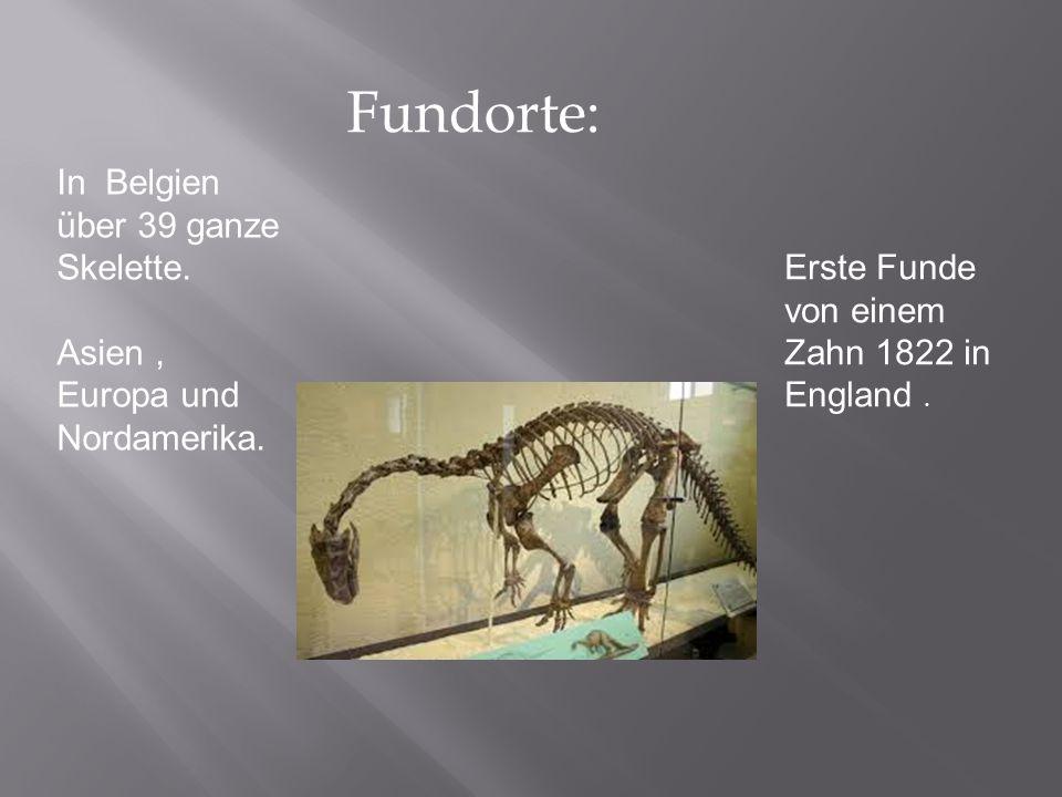 Fundorte: In Belgien über 39 ganze Skelette. Asien, Europa und Nordamerika. Erste Funde von einem Zahn 1822 in England.