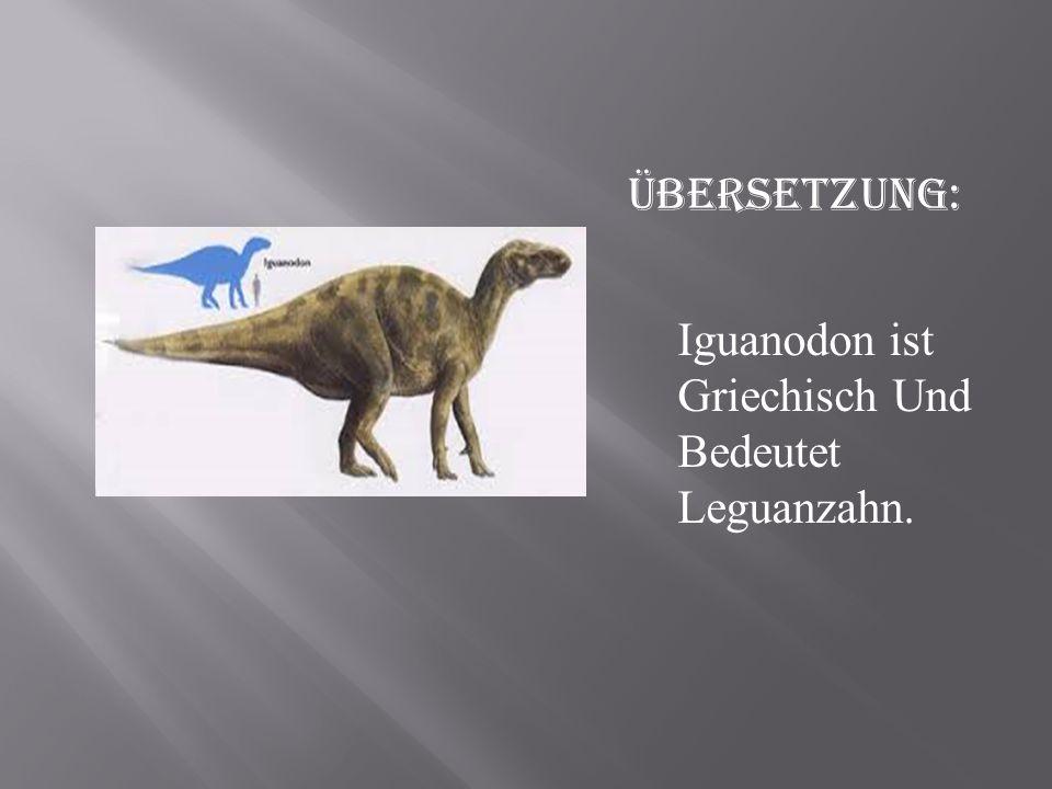 Iguanodon ist Griechisch Und Bedeutet Leguanzahn. Übersetzung: