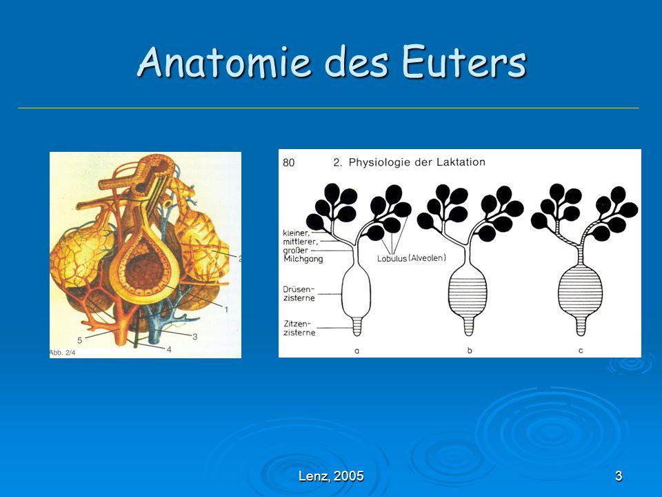 Lenz, 200524 Mastitis catarrhalis chronica Entstehungszeit: 7 – 21d Entstehungszeit: 7 – 21d Erreger: wie bei der akuten Form, typisch: Sc.