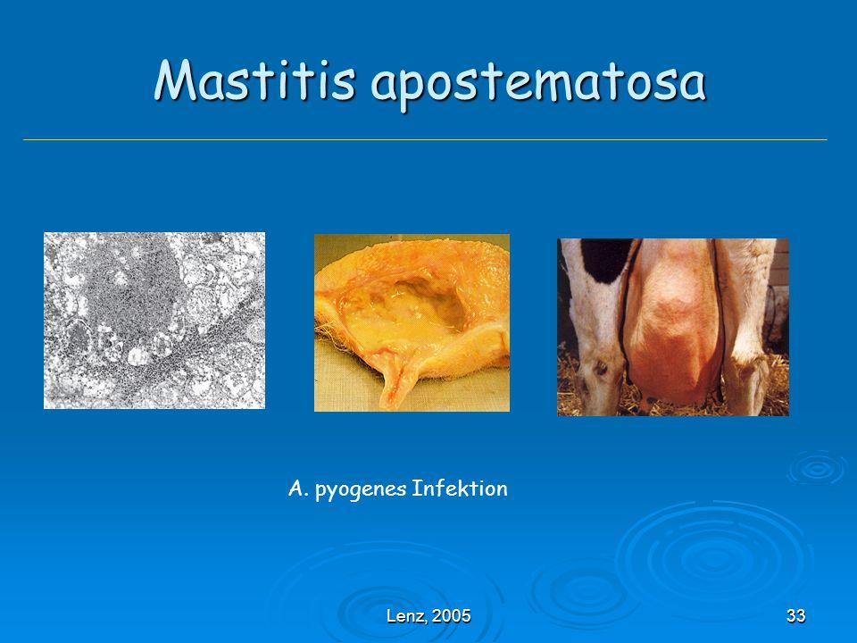 Lenz, 200533 Mastitis apostematosa A. pyogenes Infektion