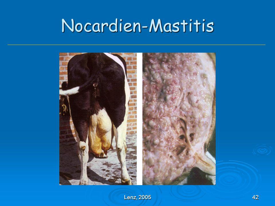 Lenz, 200542 Nocardien-Mastitis