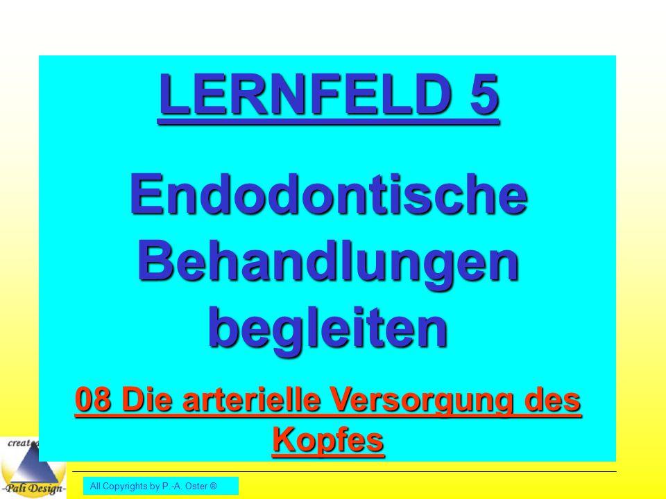 All Copyrights by P.-A.Oster ® Vokabeln: anterior: vorderer Beispiel: M.