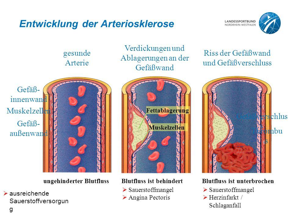 Entwicklung der Arteriosklerose  ausreichende Sauerstoffversorgun g ungehinderter Blutfluss gesunde Arterie Gefäß- innenwand Muskelzellen Gefäß- auße