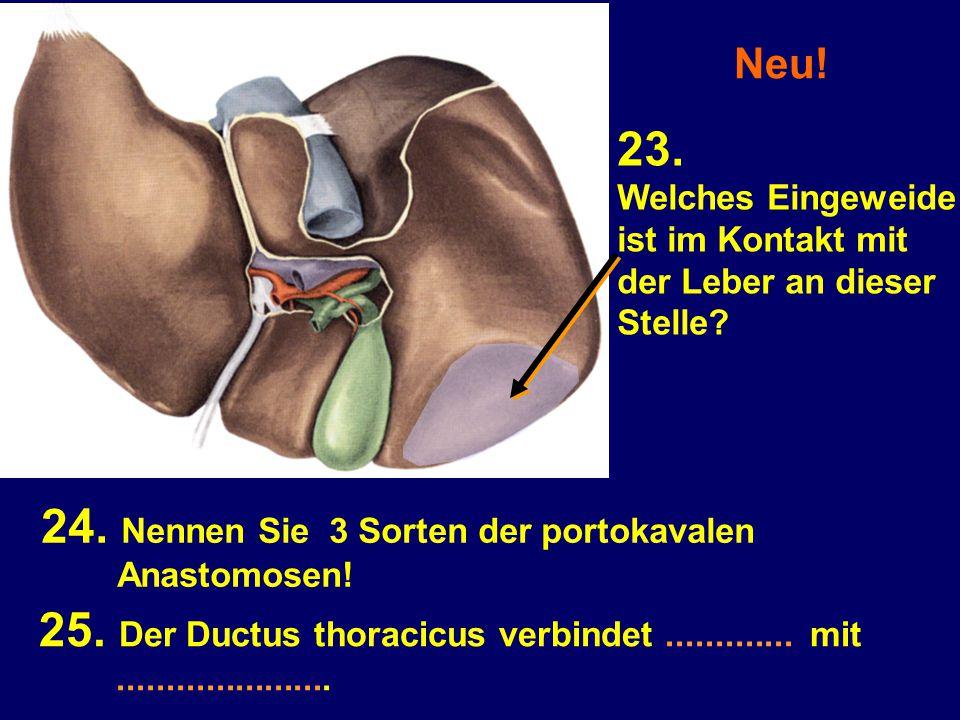 Neu! 23. Welches Eingeweide ist im Kontakt mit der Leber an dieser Stelle? 25. Der Ductus thoracicus verbindet............. mit......................