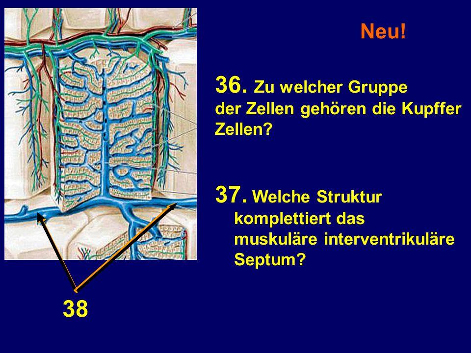 Neu! 36. Zu welcher Gruppe der Zellen gehören die Kupffer Zellen? 37. Welche Struktur komplettiert das muskuläre interventrikuläre Septum? 3838