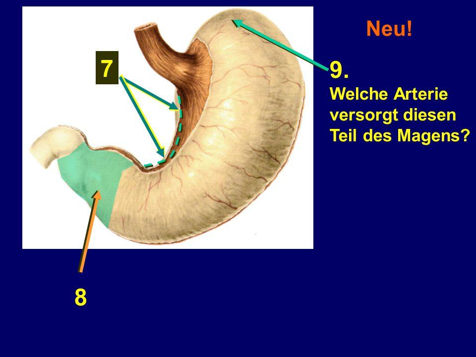 7 8 9. Welche Arterie versorgt diesen Teil des Magens?